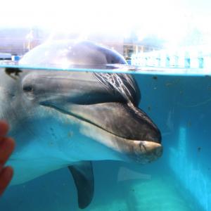 八景島シーパラダイス「ふれあいラグーン」でイルカにタッチ!大接近で超楽しい