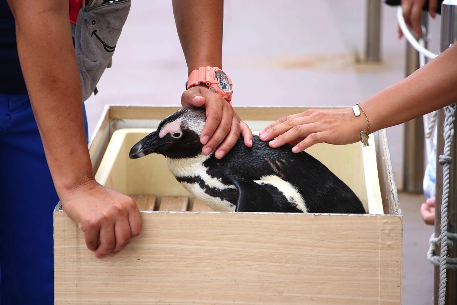 ふれあいラグーン ペンギンのパフォーマンス