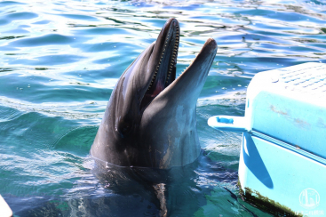 横浜・八景島シーパラダイス、水族館だけで楽しすぎ!水族館4施設の特徴と所要時間