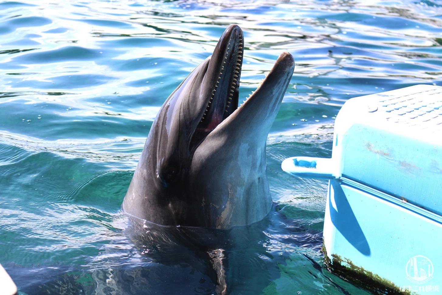 八景島シーパラダイス、水族館だけで楽しすぎ!水族館4施設の楽しみ方と所要時間