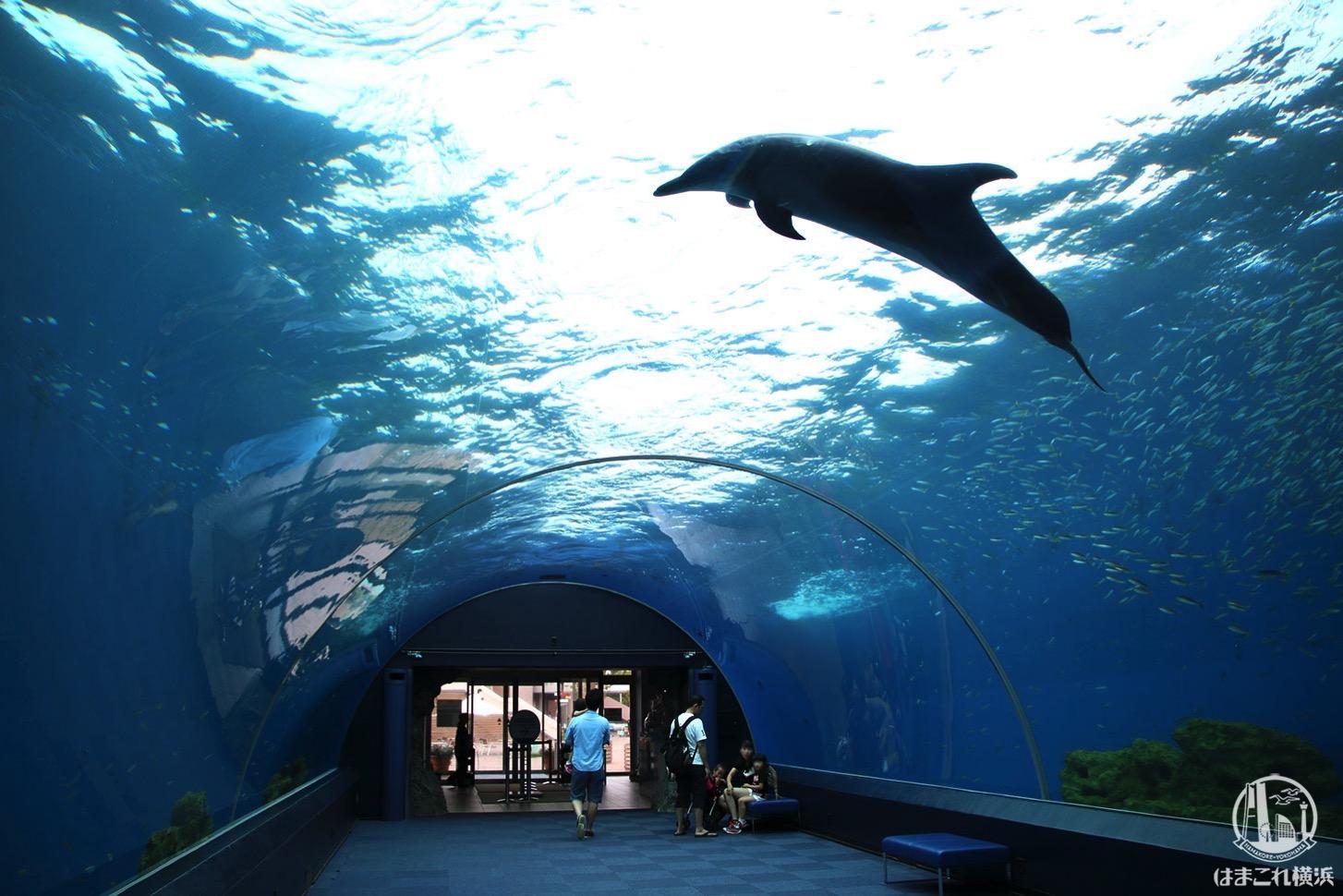 八景島シーパラ「ドルフィンファンタジー」イルカが泳ぐアーチ水槽で幻想的海中散歩!