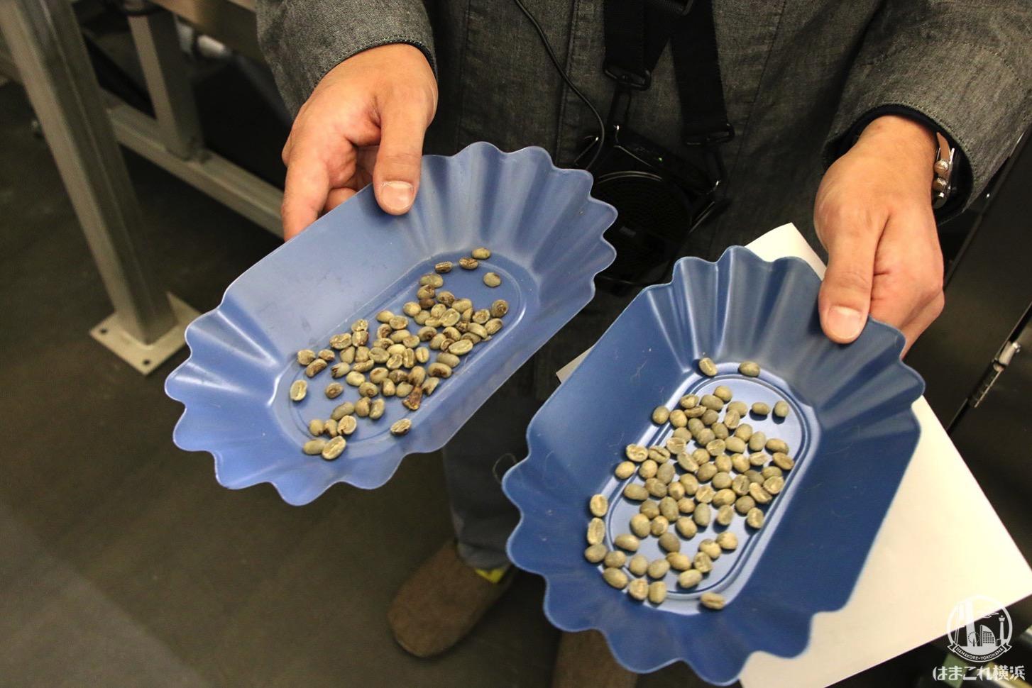 選別された生豆