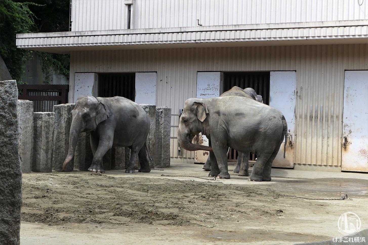 金沢動物園 ゾウ