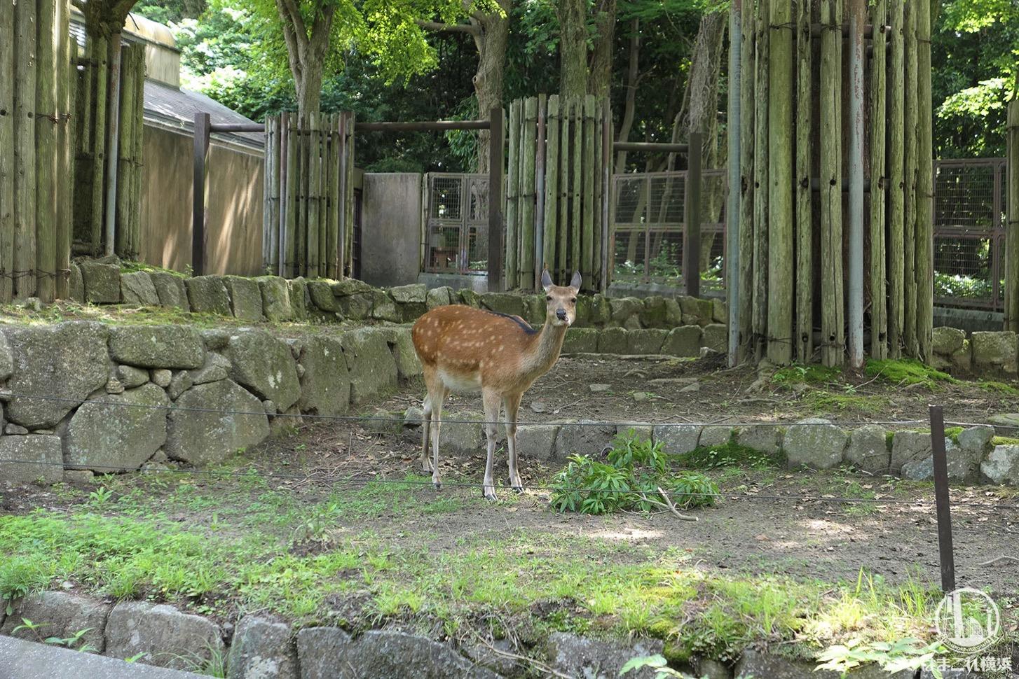 金沢動物園 シカ
