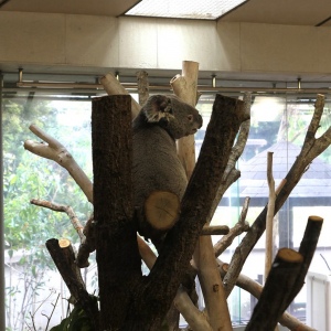 横浜「金沢動物園」コアラやオカピに会えて入園料も安い!コアラバスも乗車体験