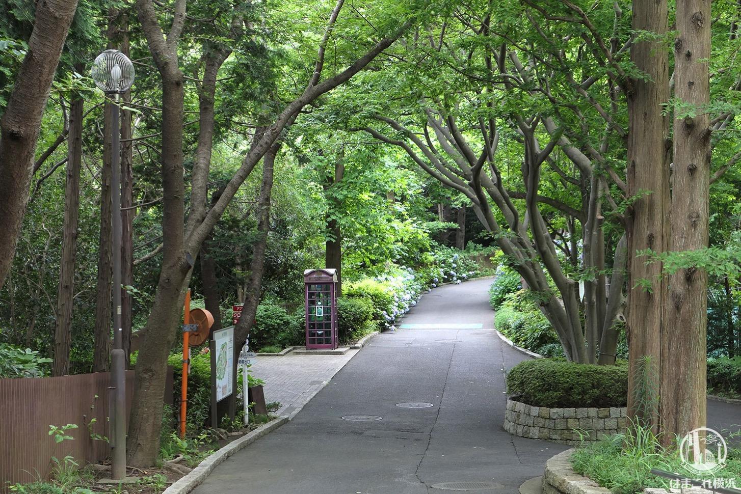 金沢動物園 ウォーキング