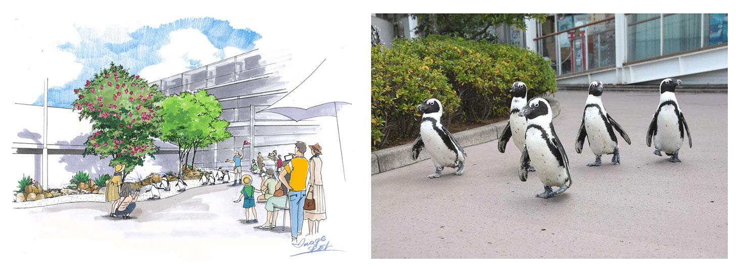 ケープペンギンの夕涼みパレード