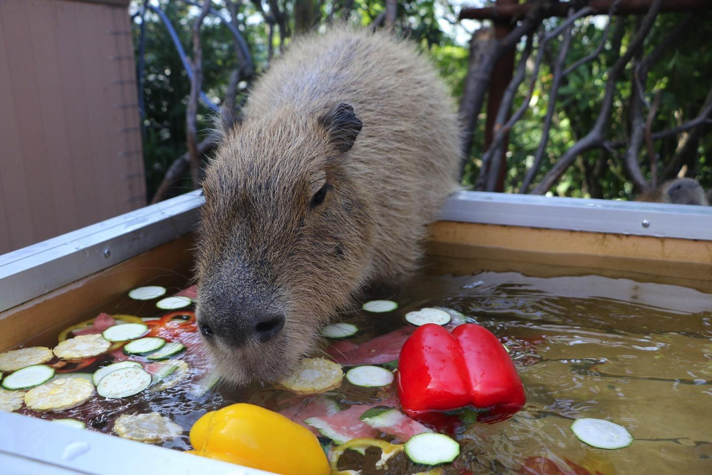 カラフル野菜風呂