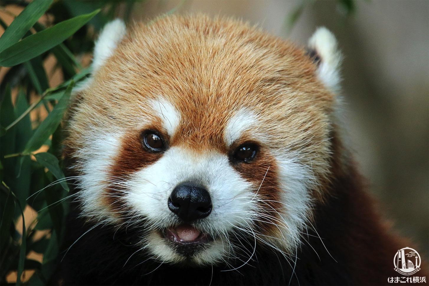 野毛山動物園は動物とふれあえる無料スポット・体験レポ!マップや行き方も