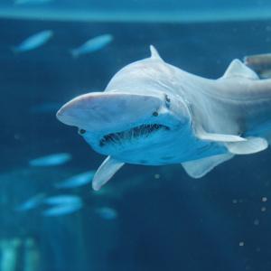 横浜・八景島シーパラダイスに深海生物の標本にさわれるエリアが誕生!