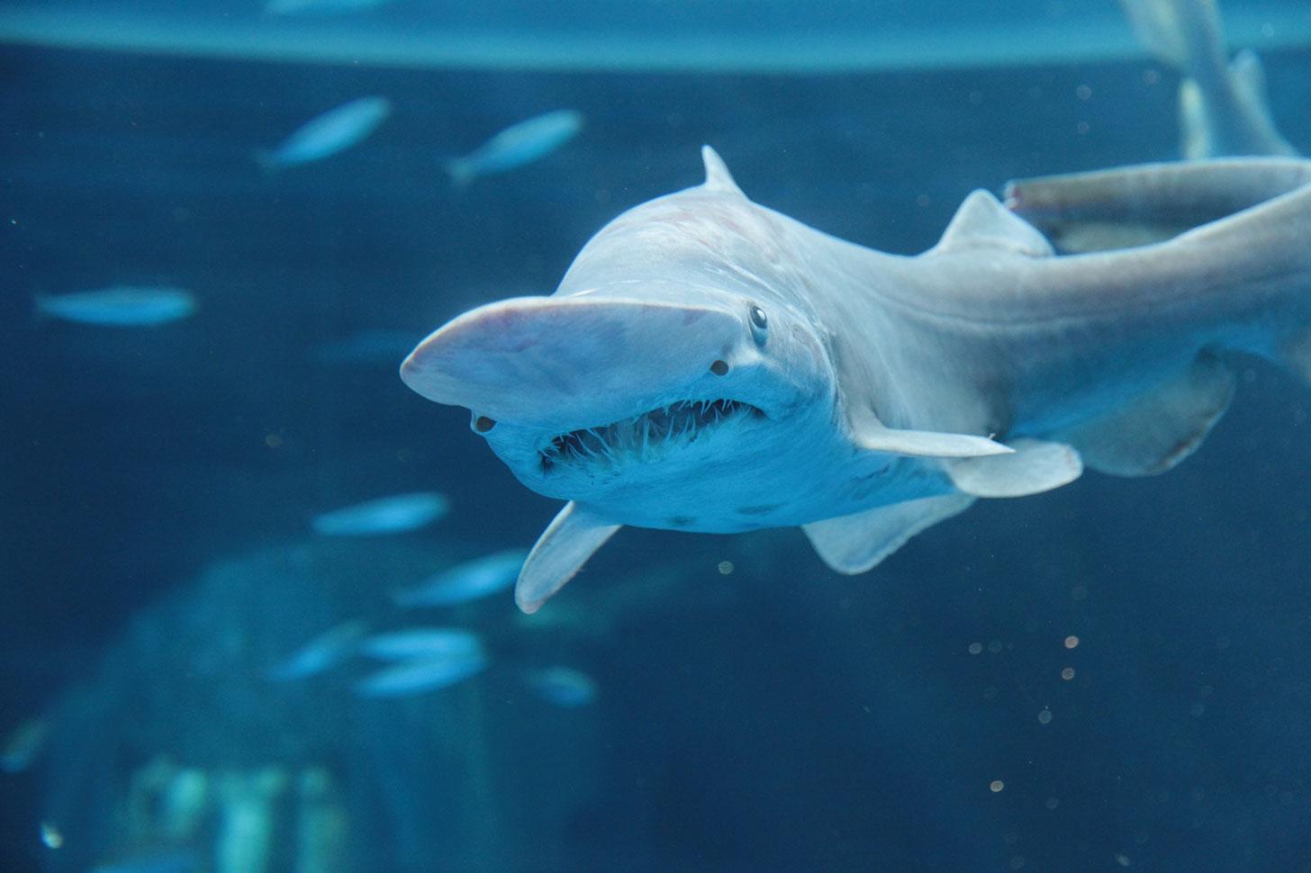 横浜・八景島シーパラダイスに深海生物の標本に触れるエリアが誕生!