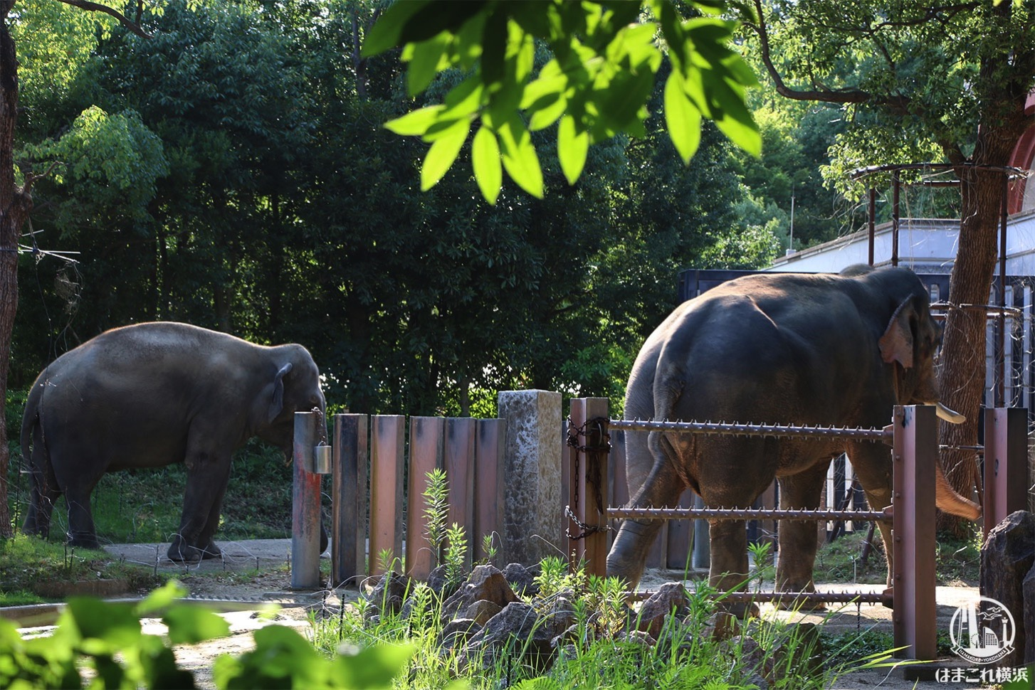 ナイトズーラシア ゾウ