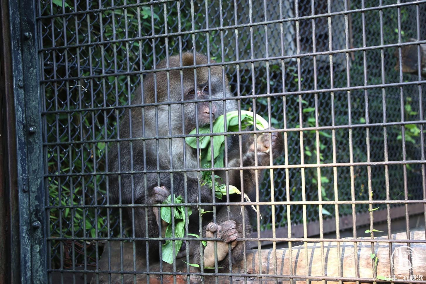 ナイトズーラシア 猿