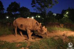 よこはま動物園ズーラシアのナイトズー、大混雑だけど夜は快適!動物もアクティブ