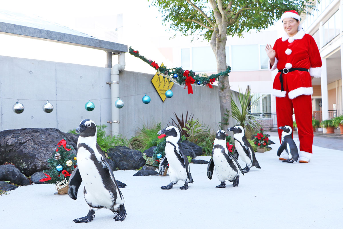 クリスマスペンギンパレード