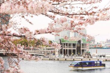 大岡川桜クルーズ、3月より運航!桜並木と横浜港のパノラマが満喫できる特別クルーズ