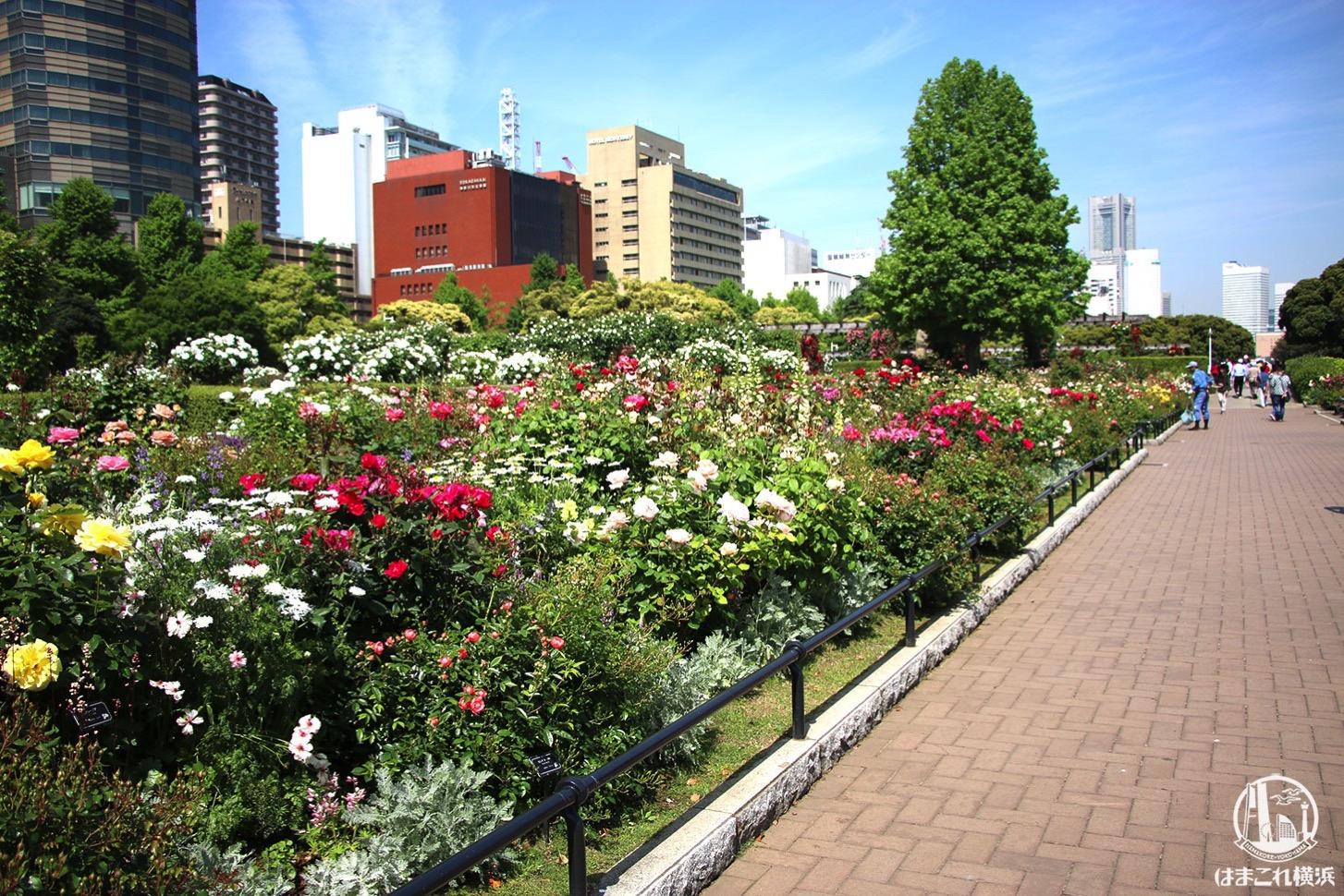 山下公園 花
