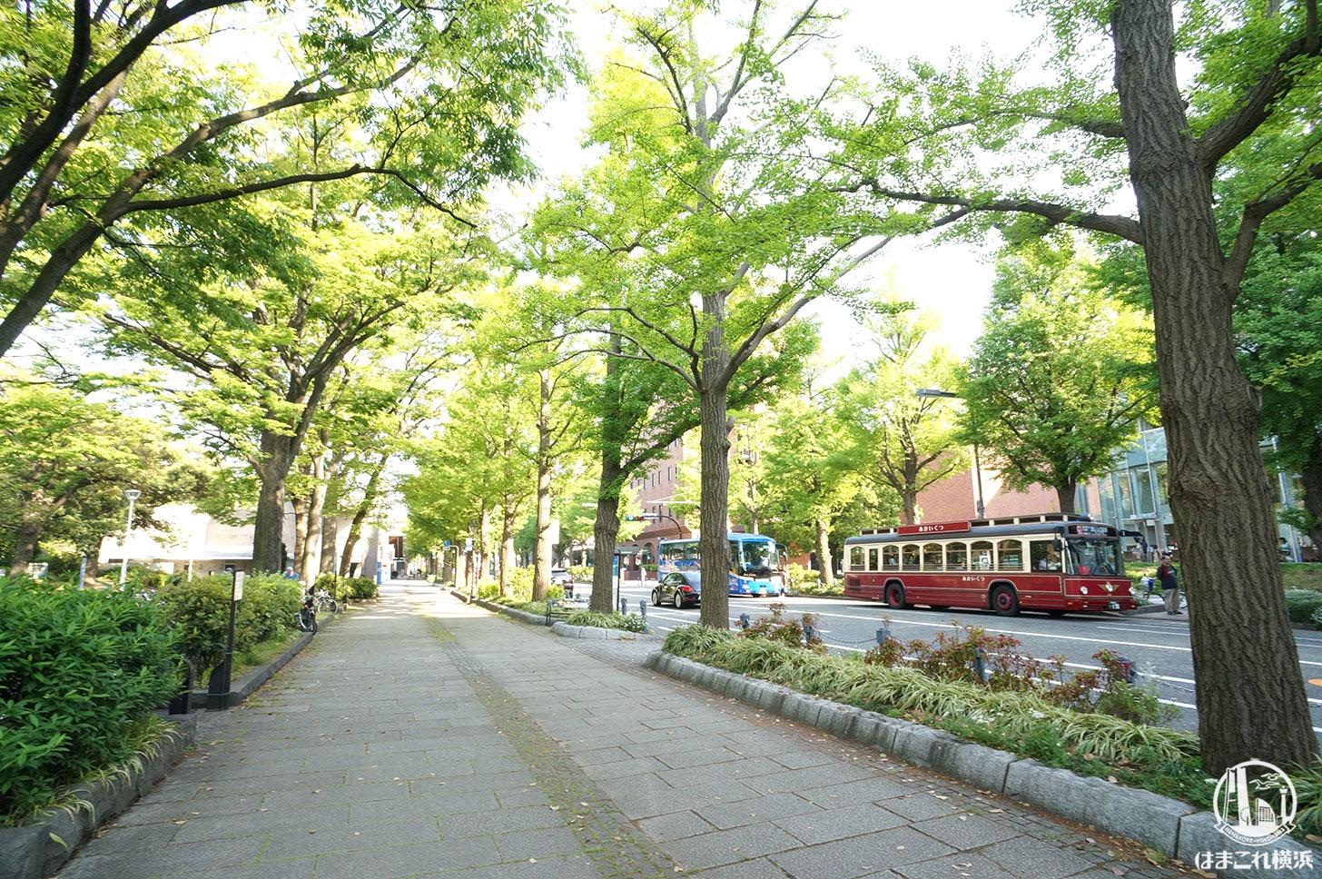 山下公園前の通り 新緑