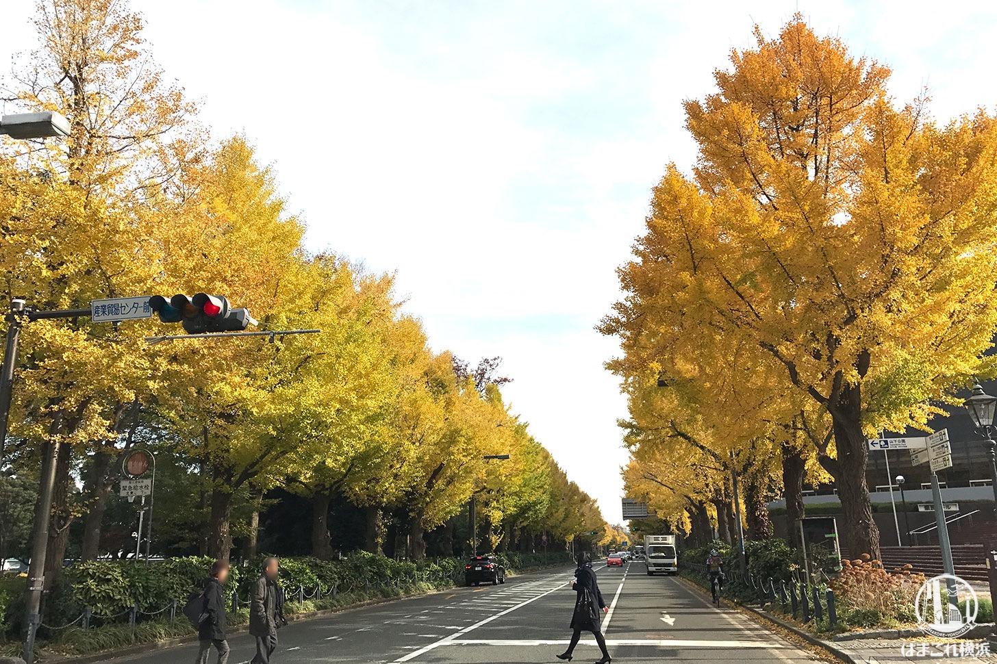 山下公園前の通り 紅葉