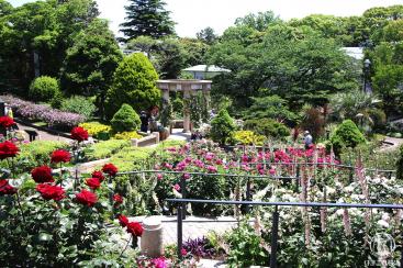 ガーデンネックレス横浜2020がみなとエリアや里山ガーデンで開催!春の花々が街を彩る