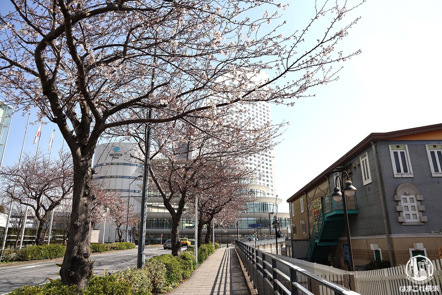 2020年 桜開花状況