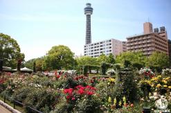 ガーデンネックレス横浜2020、5月31日まで開催中止 バラ園や里山ガーデン閉鎖