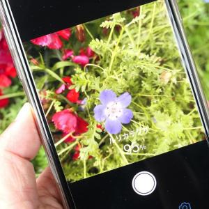 花にかざして名前が知れるアプリ「ハナノナ」「グーグルレンズ」で散歩がさらに楽しく!