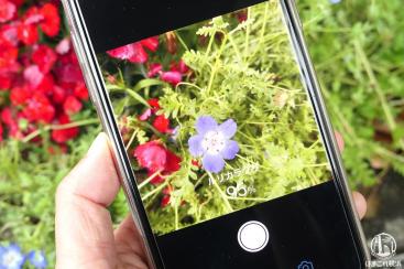 花にスマホを向けて名前が知れるアプリ「ハナノナ」「グーグルレンズ」で散歩がさらに楽しくなった!