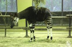 ズーラシア・野毛山動物園・金沢動物園が6月11日より再開