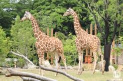 よこはま動物園ズーラシア、入園者数の上限拡大・平日の予約不要に!