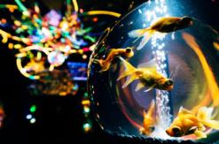 横浜ワーポに水族館、アクアリウム宇宙旅行「UNDER WATER SPACE」限定オープン!