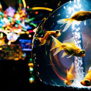 横浜ワーポに水族館・アクアリウム宇宙旅行「UNDER WATER SPACE」限定オープン!
