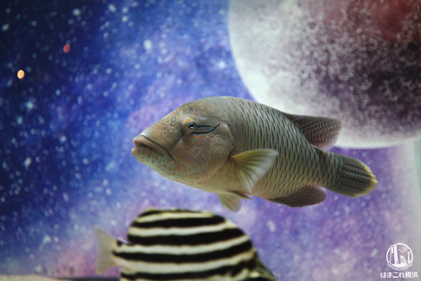 """ミニチュアアクアリウム """"宇宙魚"""""""