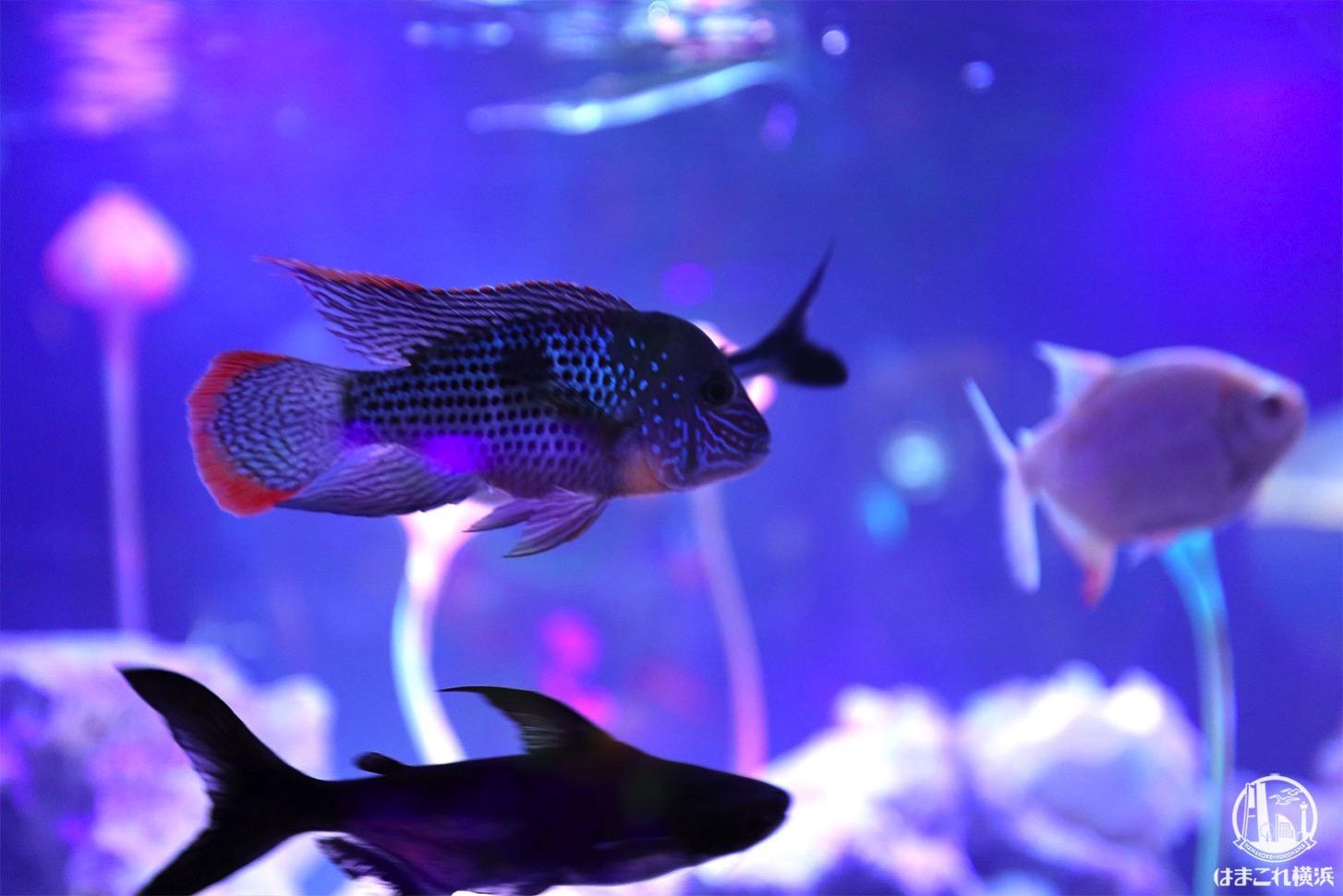 危険な森 宇宙魚
