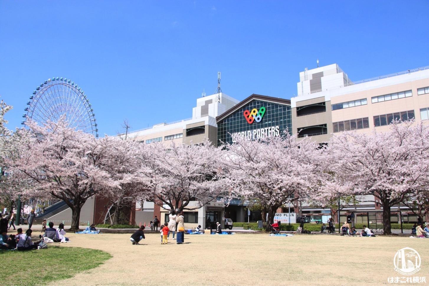 運河パークの桜