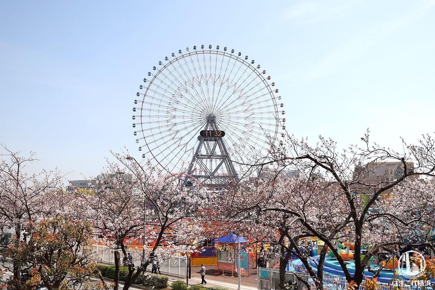 ジェイパスタテラス テラス席から見た桜と大観覧車