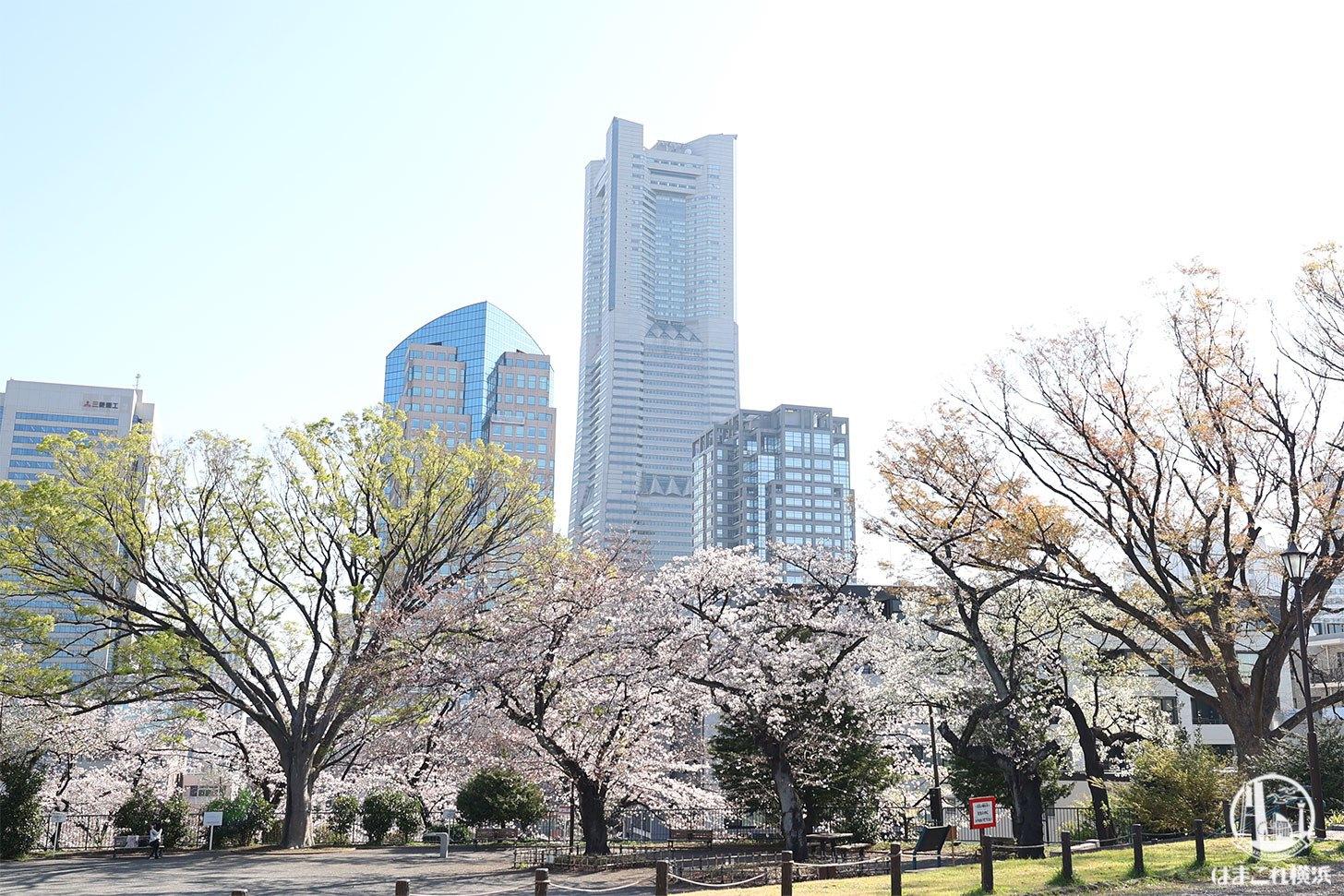 広場から見た横浜ランドマークタワーと桜