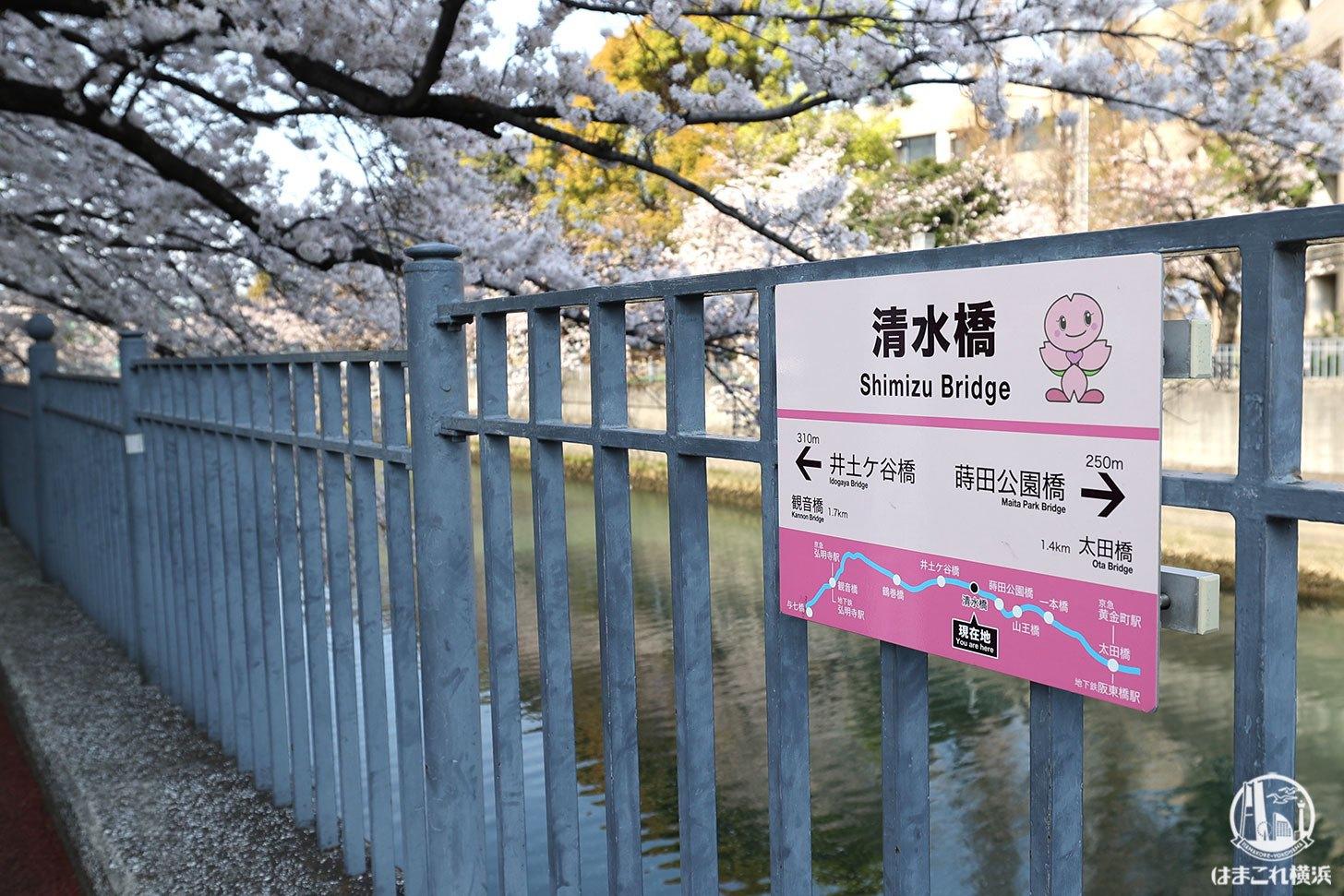 清水橋の桜