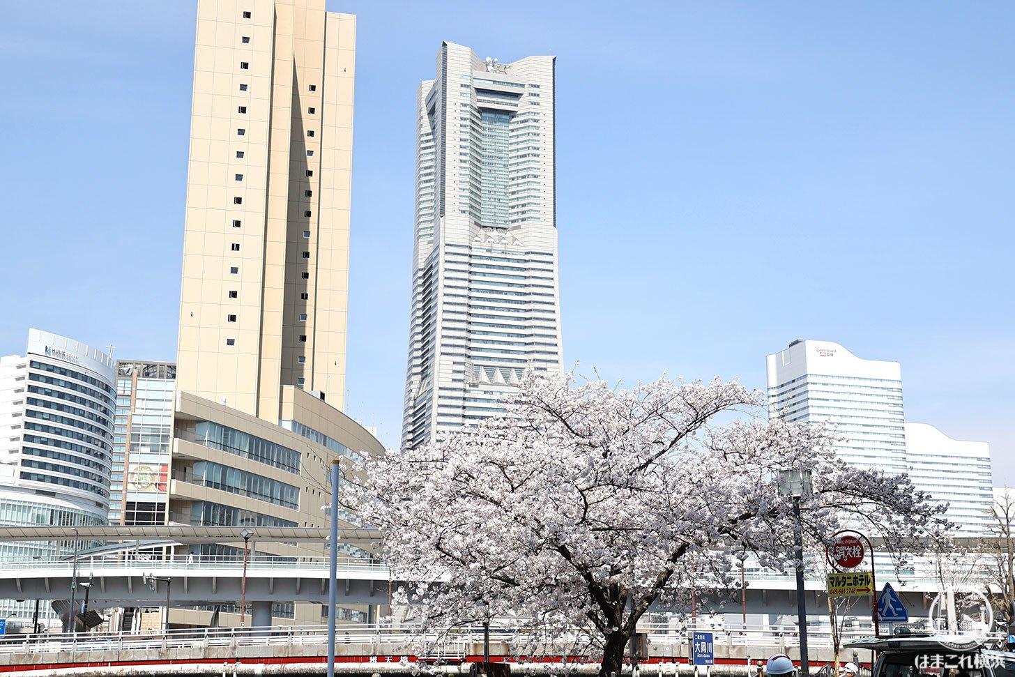 大江橋から見た横浜ランドマークタワー