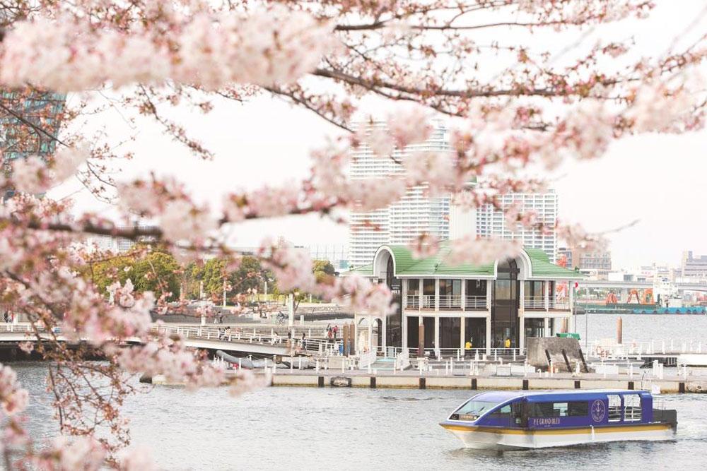 横浜・インターコンチネンタルホテル「大岡川桜クルーズ」運航!約600本の桜を船上で