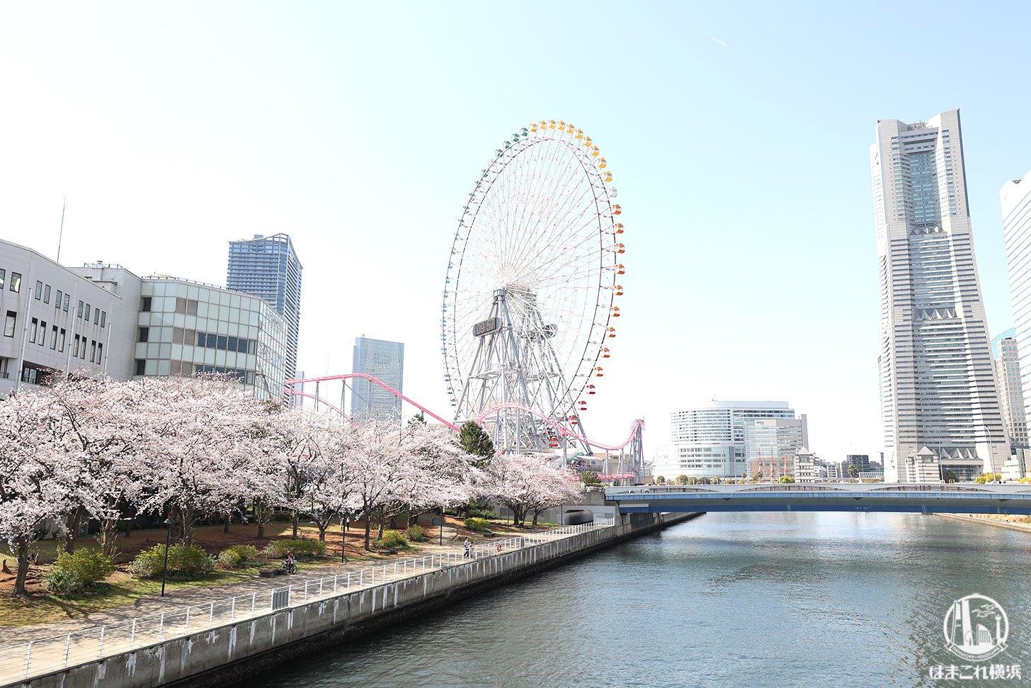 女神橋から見た新港パークの桜