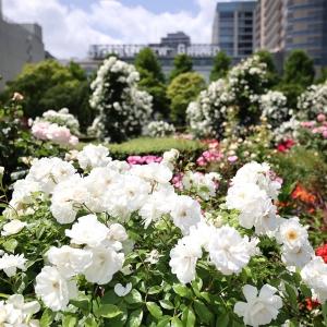 山下公園のバラが美しすぎた!圧倒的ボリューム・彩り豊かな癒しのバラ散歩