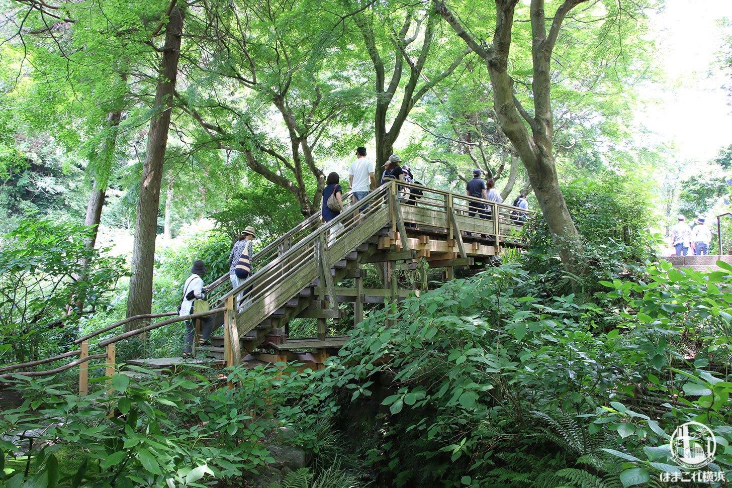 明月院(あじさい寺)の自然に囲まれたデッキ