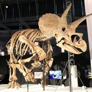 横浜「DinoScience 恐竜科学博」見どころ満載!奇跡の化石や大迫力映像など全貌レポ