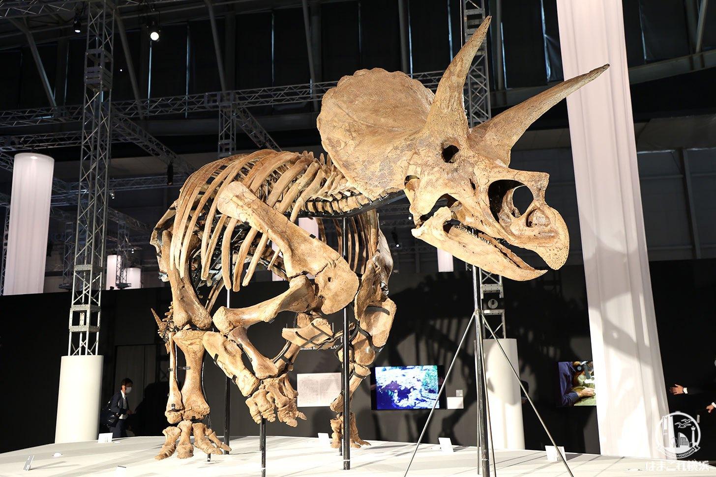 横浜「DinoScience 恐竜科学博」見どころ満載!トリケラトプス化石展示や大迫力映像体験など全貌レポ