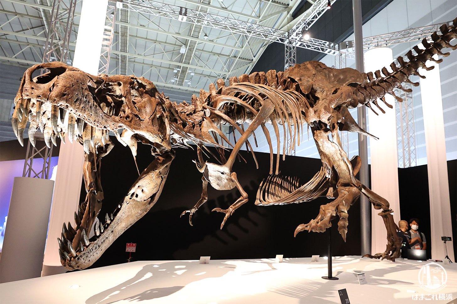 ティラノサウル「スタン」