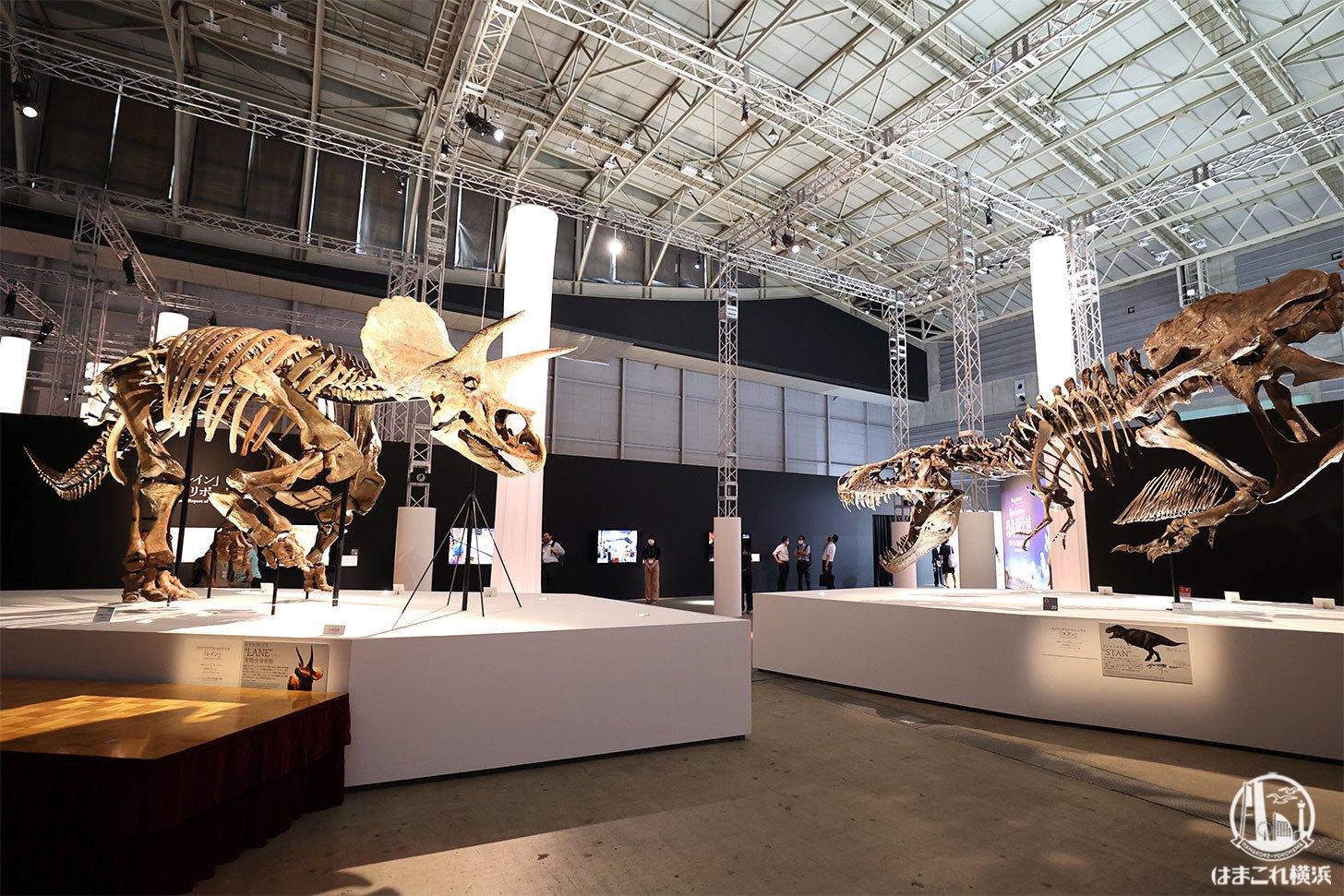 トリケラトプス「レイン」とティラノサウル「スタン」