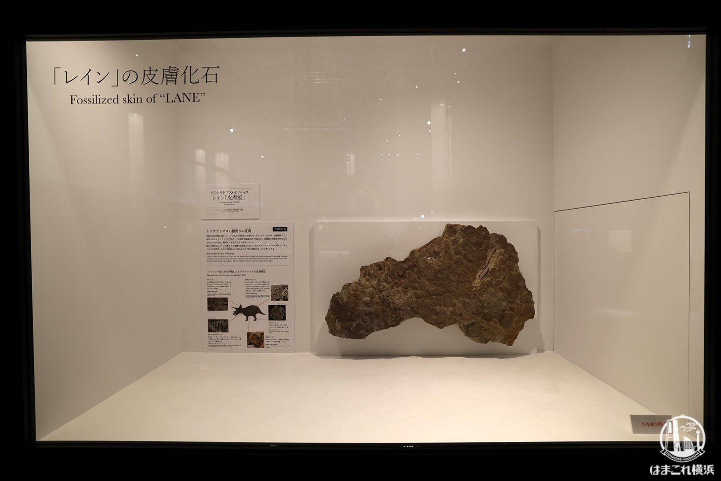 レインの皮膚化石
