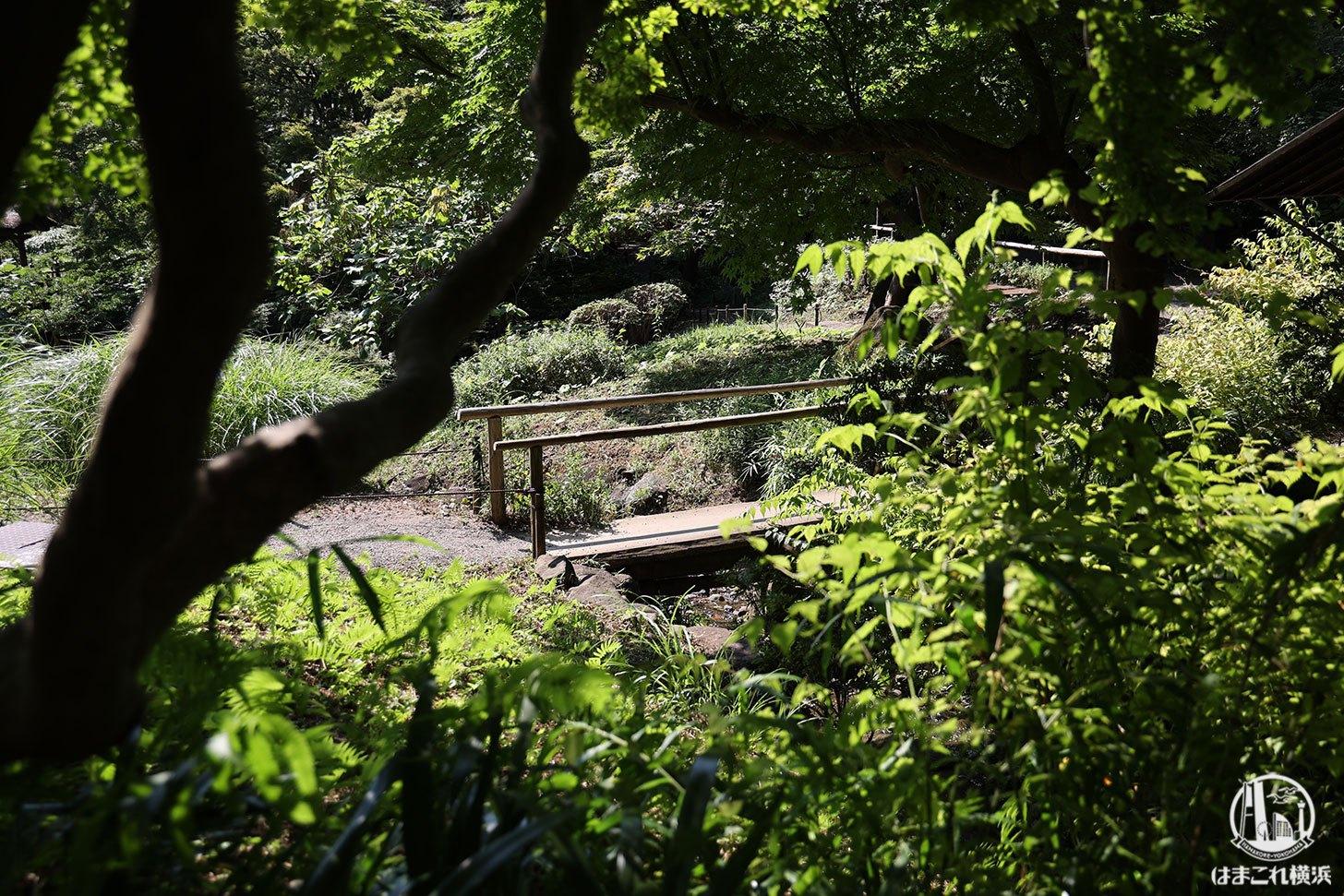 三溪園 新緑の風景