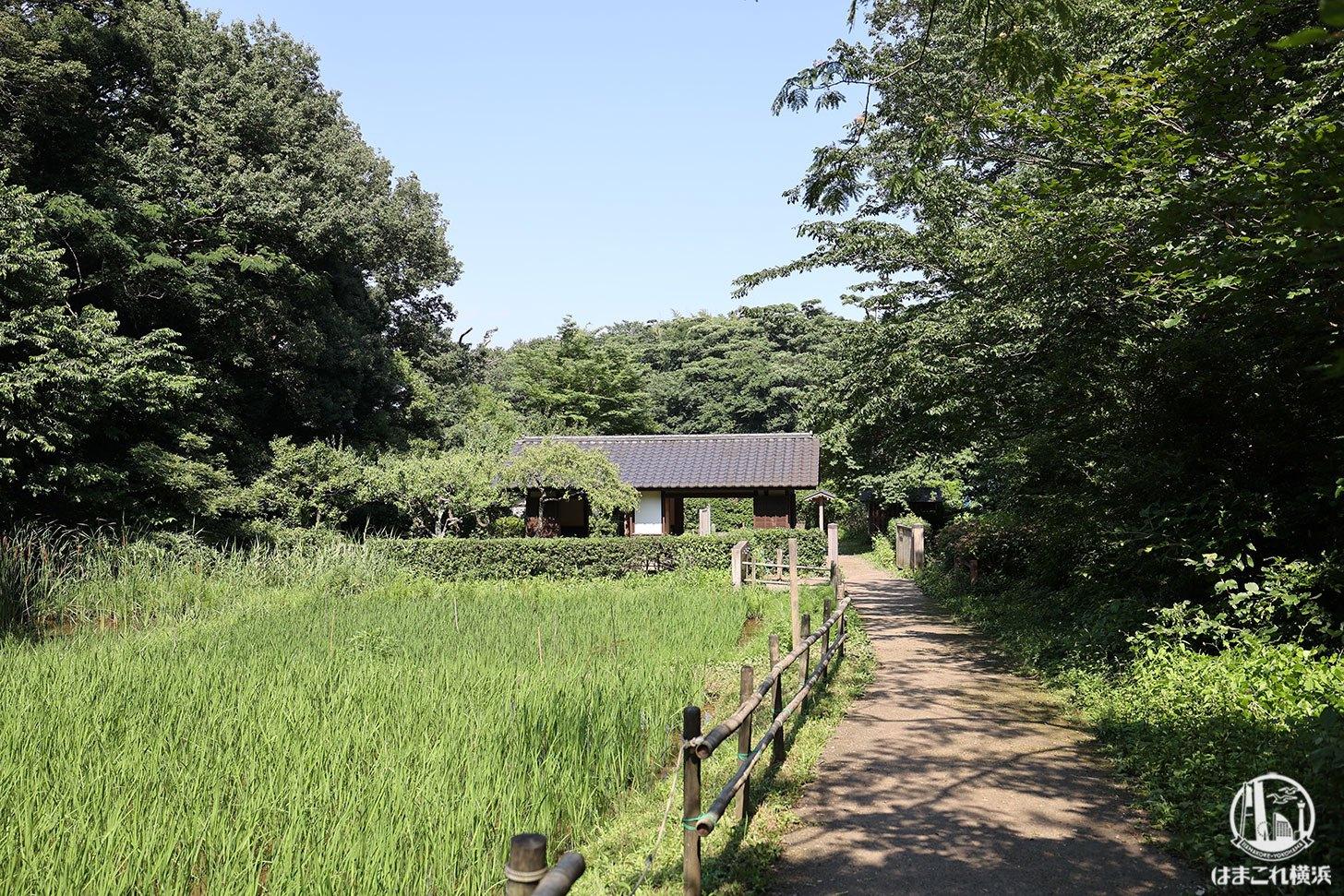 舞岡公園で森林浴!横浜で田園風景に癒されながら自然に触れたり生きもの見たり